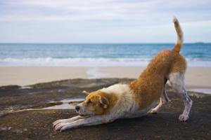 downwards facing dog