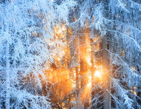 sun winter
